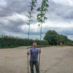 nick with tall hemp